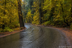Yosemite National Park - Fall Colors - 0963 (www.karltonhuberphotography.com) Tags: california road autumn trees fall nature wet beautiful leaves lines rain yellow forest landscape freshair lowlight shadows fallcolors curves relaxing peaceful calm autumncolors yosemite yosemitenationalpark raining yosemitevalley softlight naturephotography wetstreet mountainroad leadinglines 2015 landscapephotography diffusedlight valleyfloor karltonhuber nikond750