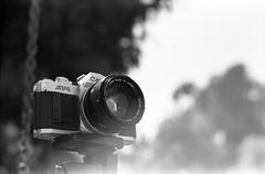 AV-1 on Tmax (Sergiy Lenzion) Tags: blackandwhite bw film monochrome prime fuji dof kodak bokeh tmax iso400 scan d76 negative 55mm epson f22 135 fujica st705 kodaktmax400 perfection tmy selfdeveloped bwfilm 4990 kodakd76 classicblackwhite bokehlicious film:brand=kodak filmism developer:brand=kodak developer:name=kodakd76 film:iso=320 film:name=kodaktmax400 bwfp filmdev:recipe=10501