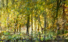 HSS! Dazzled by Light (Elisafox22) Tags: autumn light macro leaves sunshine photomanipulation photoshop lens golden woods patterns sony textures blaze photomanipulated postprocessing hss 100mmf28macro sliderssunday slta58 elisafox22 elisaliddell©2015