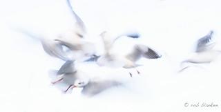 Dancing in the Air (2)