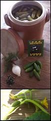 Cornichons fait maison (Mouvements Libres) Tags: blanc poivre jarre naturel oignon cornichon estragon faitmaison mouvementslibres
