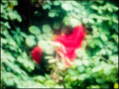 20151023-063 (sulamith.sallmann) Tags: plants plant abstract blur germany effects deutschland leaf blurry europa pflanze pflanzen vivid blatt bltter unscharf deu effekt leuchtend unsharp abstrakt mecklenburgvorpommern verschwommen twocolors grnrot neustrelitz rotgrn unschrfe mecklenburgischeseenplatte zweifarbig sulamithsallmann folientechnik