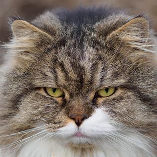 Party's over - Feelin' grumpy (Monday face)