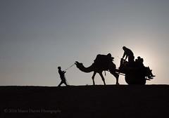 Thar Desert, Rajasthan, India (mrcdvs) Tags: sunset india camel jaisalmer rajasthan thardesert