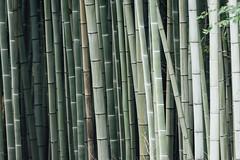 Heller Hain (banjipark) Tags: japan kyoto grove bamboo bambus hain