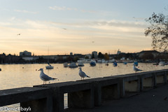 """Gulls are chatting. • <a style=""""font-size:0.8em;"""" href=""""http://www.flickr.com/photos/136107982@N06/23509918773/"""" target=""""_blank"""">View on Flickr</a>"""
