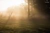IMG_1927 (hillarycharris) Tags: morning trees mist nature fog sunrise canon landscape outdoors foggy tamron morningmist naturephotography morningfog mistymorning treesinfog foggytrees foggylandscape sunrisephotography treesinmist mistylandscape canonrebelt5 canoneost5