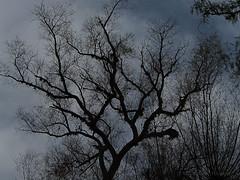 Pirul (marthahari) Tags: naturaleza planta mxico cielo rbol historia hidalgo airelibre crta caminorealdetierraadentro
