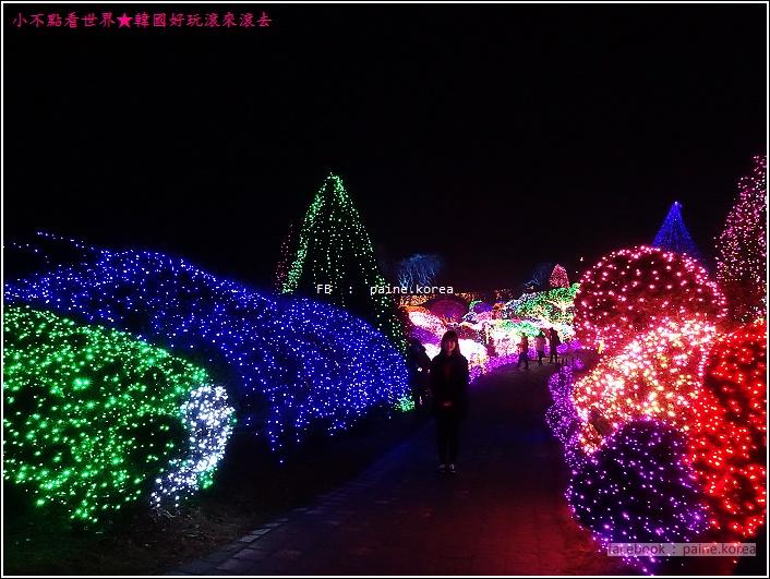 晨靜樹木園 五色星光庭園展 (41).JPG