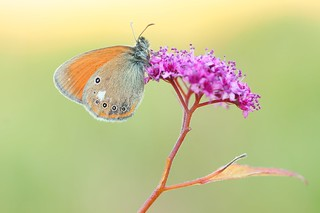 Jesus was a butterfly...