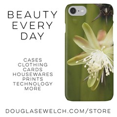 Buy this White Cactus Flower iPhone case and much more at http://ift.tt/1hfrEWq #flowers #garden #cactus #succulent #iphone #technology #clothing #bags #arts #crafts #cards #products (dewelch) Tags: ifttt instagram buy this white cactus flower iphone case much more douglasewelchcomstore flowers garden succulent technology clothing bags arts crafts cards products