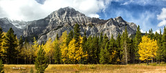 Fall colours in the Rockies (Canon Queen Rocks (1,030,000 + views)) Tags: landscape landscapes scenery scenic mountains fall autumn colours beautiful alberta rockies snow trees leaves golds canada
