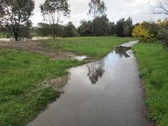 Flooded footpath beside embankment (troggonk) Tags: ginnderra creek act sept 2016 ngunnawal gungahlin water erosion maintenance