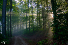 the path (Funkraft) Tags: waldweg weg path trees forest mist fog rays strahlen sonne nebel herbst autumn outdoor fujfilm xt2