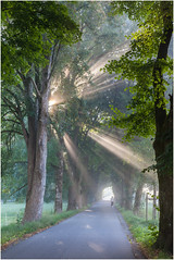 early morning .. (:: Blende 22 ::) Tags: sunny morning allee alley trees deutschland germany bayern benediktbeuern strasen street sun sunrise rays sunrays fog foggy canoneos5dmarkii ef2470f28liiusm morgens earlymorning