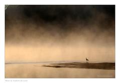 Sance de Thalasso en loire (Bruno-photos2013) Tags: mouette oiseau birds loire brume bretagne brouillard sunrise leverdujour leverdusoleil aube paysageligrien landscape
