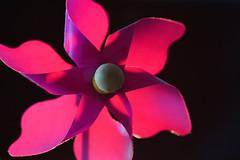 Windmhle im Gegenlicht (ingrid eulenfan) Tags: macromondays macro makro windmhle gegenlicht backlit windmill pink