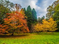 Its Autum at Westonbirt Arboretum (RS400) Tags: trees tree colours cool wow amazing wicked wild landscape sky blue yellow orange grass westonbirt arboretum ol olympus wid wide uk wiltshire photo