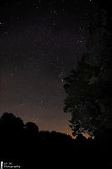 Stars and Trees (Dr. M.) Tags: stars astrophotography night trees nikon d7000 cold crisp manual longexposure blackwhite