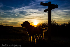 Decisions ahead (judethedude73) Tags: sunset dusk evening sun sunsets sussex downs south sky blue clouds pet shadow light labradoodle labradoodles