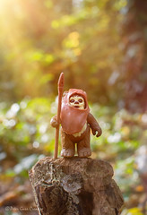 Morning Ewok (Peter Gurr Creative) Tags: 18g nikon d7200 dslr photography toy toyphotography kenner palitoy figure action actionfigure jedi return returnofthejedi stump dawn sunlight sun trees wood forest moon endor ewok wicket wicketwwarrick wars star starwars