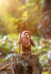 Morning Ewok (Peter Gurr Creative) Tags: 18g nikon d7200 dslr photography toy toyphotography kenner palitoy figure action actionfigure jedi return returnofthejedi stump dawn sunlight sun trees wood forest moon endor ewok wicket wicketwwarrick wars star starwars