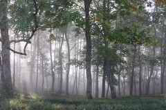foggy forest (eyeflyer) Tags: thefoggyseason hills jura forest trees herbst autumn fog visipix