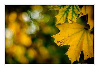 Autumn 2 NM