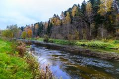October on the river #2 (Unicorn.mod) Tags: 2016 canon canoneos6d october river autumn manual manuallens samyang samyang24mmf14edasifumc landsape water