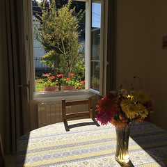 P20161016_120324509_32A36765-1A44-4BB0-99A8-5B3319044017 (ji0405hye) Tags:            france cotidien flowers fleurs maison weekend loches beau ilfaitbeau campagne village