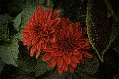 red & green (Pejasar) Tags: flower foliage nature green beauty red black color blooms two blossoms art
