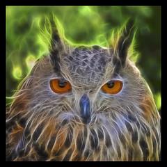 (wilphid) Tags: oiseaux topaz glowfx