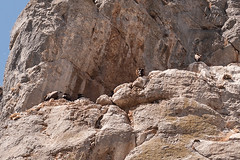 Garganta de la Yecla, Santo Domingo de Silos (jacqueline.poggi) Tags: desfiladerodelayecla espagne espaa gargantadelayecla parquenaturaldelayecla santodomingodesilos spain yecla arroyodelcauce buitre canyon gorge rio river vautour vultur