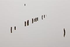 Ecriture d'tangs 1 / Writing ponds 1 (Phil Chapp) Tags: graphisme reflets eau lumire alignement zen composition canon 5dmarkii philchapp