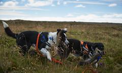 28august_Hringur&Venus_lastPlay_164 (Stefán H. Kristinsson) Tags: hringur venus august 2016 play leikur last reykjanes patterson iceland ísland