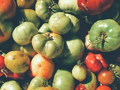Tomatoes #tomatoes #iphone7plus #iphoneography #fineartphotography #hollingsworth #vegetables (shollingsworth) Tags: tomatoes iphone7plus iphoneography fineartphotography hollingsworth vegetables