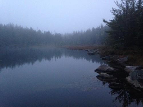 Deep Pond - www.amazingfishametric.com