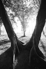 Gateway to the Brighter World! (Ramesh Adkoli) Tags: landscape lalbagh bw blackwhite d800e capturenx