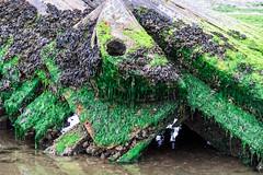 decaying (pamelaadam) Tags: newburgh aberdeenshire scotland forviesands june summer 2016 visions meetup digital fotolog thebiggestgroup