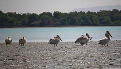 Mangrove Jungle - Qeshm Island (daniyal62) Tags: mangrove jungle qeshm island iran birds canon eosm m efs 55250mm f456 is stm