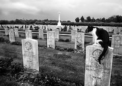 Ortona - war canadian cimitery (mat.roso) Tags: ortona abruzzo italia war canadian cimitery 2worldwar italy memory