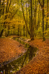 Golden autumn 3 (JTPhotography) Tags: autumn golden leaves trees nature water reflections sunny wildlife rivers lake panasoniclumixg6 olympus918mm