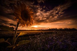 A fairy-tale sunset