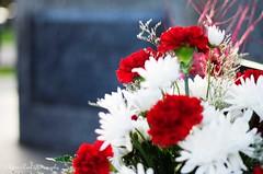 Flowers2 (che2525) Tags: hendrix jimmy memorial grave site purple haze little wing rock roll
