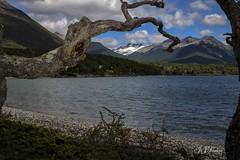 """Fascinante"" (JJSantosphoto) Tags: ushuaia2013 jjsantosphoto jjsantos canon viagem travel montanha neve lagofagnano lago fagnano ushuaia patagoniaargentina patagonia argentina morro pico nevado"