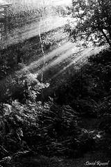 DSCF4867 (nikonaute777) Tags: white black france noir fuji fujifilm 24 60mm paysage blanc fort fontainebleau 1650 xt10 xtrans