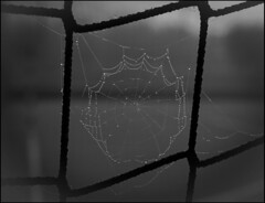 DOBLE RED. (TOYOGRACOR) Tags: red macro luz canon spider flickr dof bn explore gotas araa soe rocio araas blackwite teladearaa godlovesyou flickrs bej mywinners aplusphoto reflejosdeluz flickrdiamond theoriginalgoldseal mygearandme mygearandmepremium mygearandmebronze mygearandmesilver flickrsfinestimages1