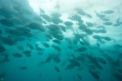 20150927-DSC_6737.jpg (d3_plus) Tags: sea sky fish beach japan scenery underwater diving snorkeling  shizuoka    apnea izu j4            1030mm  nakagi 1   1030mmpd wpn3