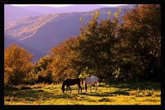 Luces de otoño (DE TIERRA) Tags: luz atardecer caballos gavin paisaje campo otoño animales prado montañas prados serenidad valletena