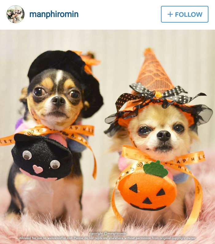 The World's Best Photos of chihuahua and costume - Flickr ...